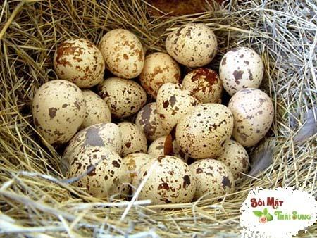lợi ích không ngờ của trứng chim cút